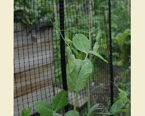 Grow Bag Frame Net 3