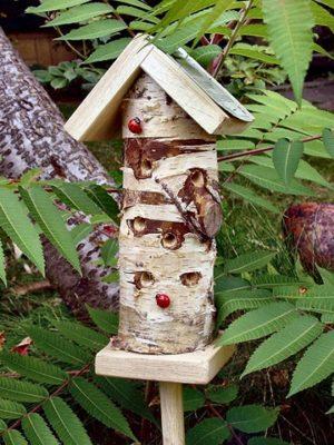 Lieveheersbeestjes insecten toren