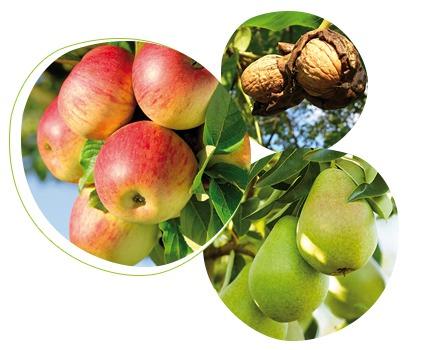 Feromonen tegen de worm in appel, peren en noten-1438